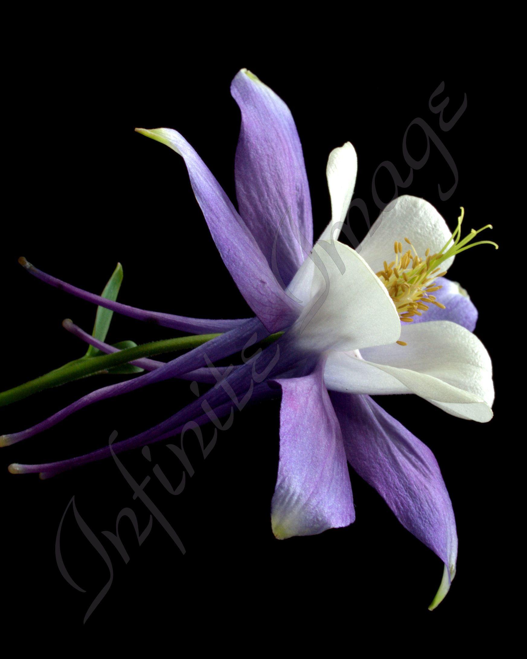 Fine art prints for sale 16x20 fine art purple beauty artsyhome fine art prints for sale 16x20 fine art purple beauty artsyhome izmirmasajfo Gallery