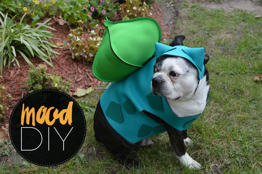 Mood Diy Bulbasaur Dog Halloween Costume Dog Halloween Costumes