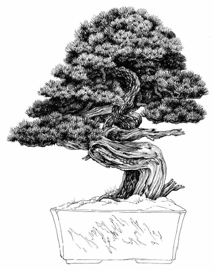 Dibujo Del Maestro Venezolano Nacho Marin Perteneciente A Su Libro 100 Bonsai Tree Sketches Bonsai Art Bonsai Tree
