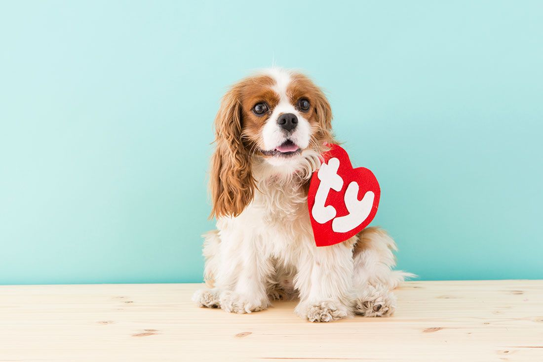 This Is The Easiest 90s Dog Costume You Can Make This Halloween