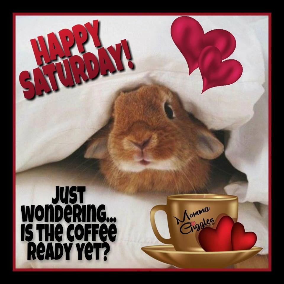 Just Wondering Is The Coffee Ready Yet Happy Saturday Happy Saturday Images Happy Saturday Saturday Coffee