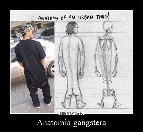 anatomia ganstera | funny, witty, wacky, obtuse | Pinterest | Anatomía