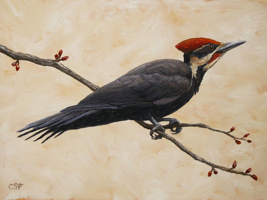 Pileated Woodpecker Painting by Crista Forest - Pileated ...