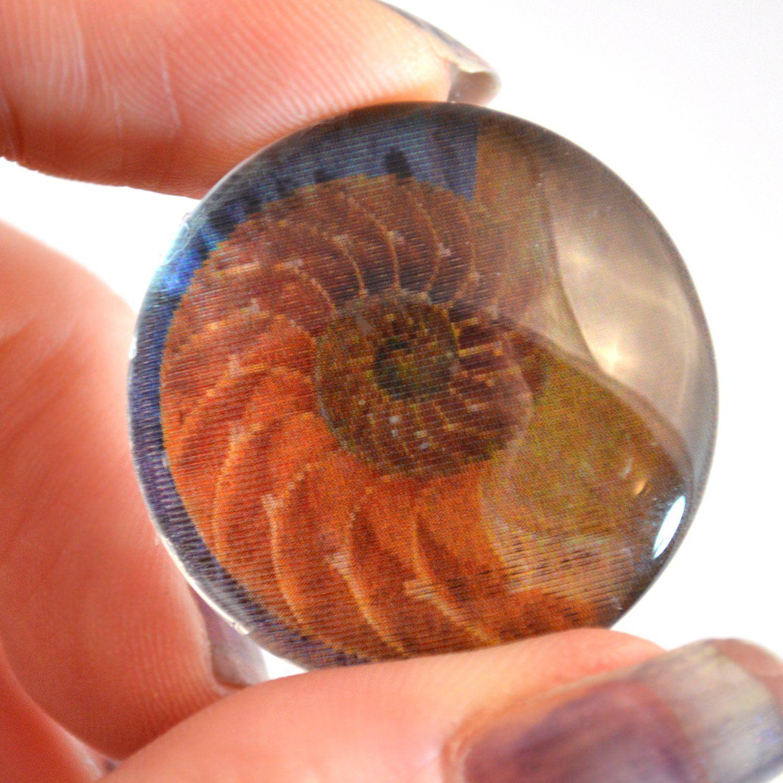 Animated Pictures Of Seashells sea shell animated mermaid glass eye | mermaid glass, sea