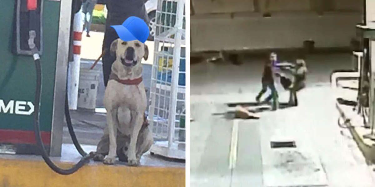 Stray Dog Adopted By Gas Station Rushes To The Rescue During Armed Robbery Animal Shelters Near Me Dogs Dog Adoption