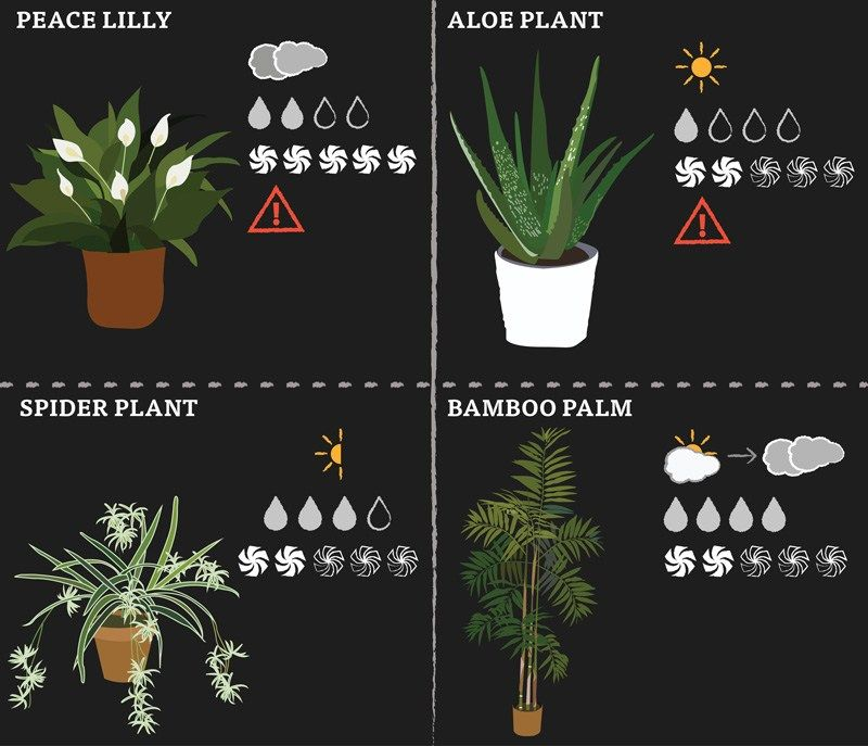 These Low Maintenance House Plants Purify The Air We Will Tell You How Much Water And Sunlight Each Plant Needs Their Ability To Clean