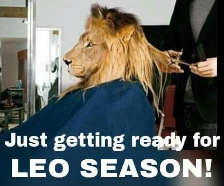Pin By Candice On Signs Leo Season Memes Leo Season Funny Lion