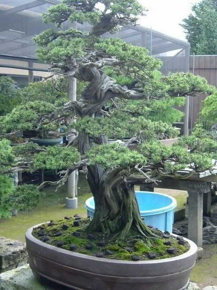 70 Amazing Bonsai Tree Care homedecore homedecorideas
