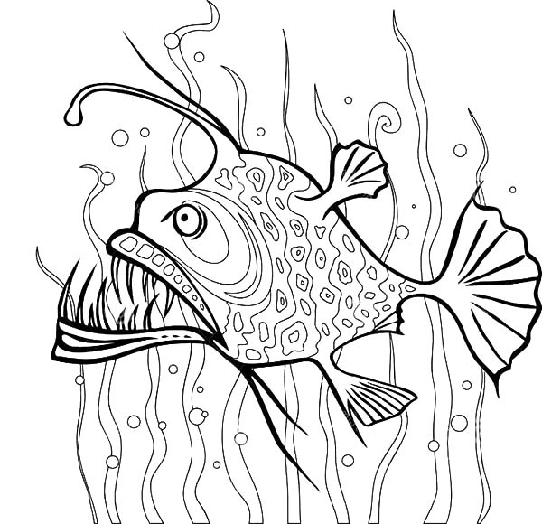 Angler Fish Between Seaweed Coloring Pages Best Place To Color Fish Coloring Page Deep Sea Creatures Art Sea Creatures Art