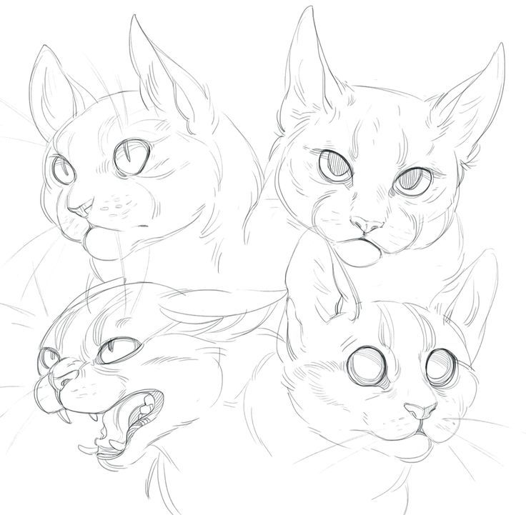 Cat doodles by SHADE-ShyPervert. on @DeviantArt