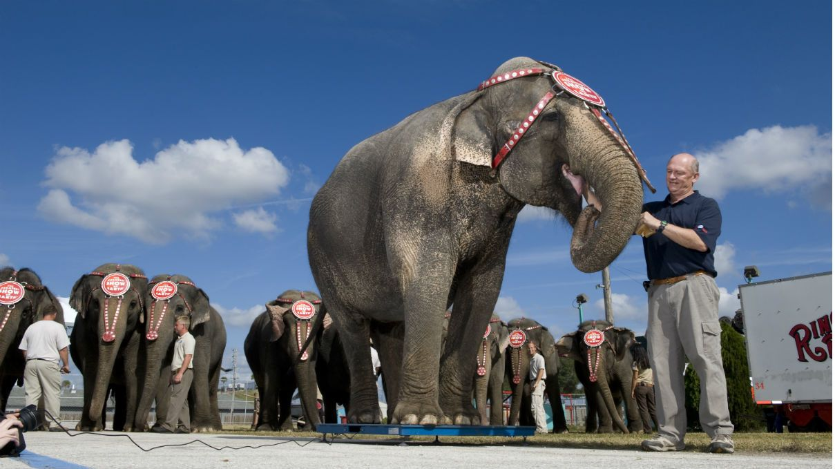 Found on Bing from Elephant, Ringling