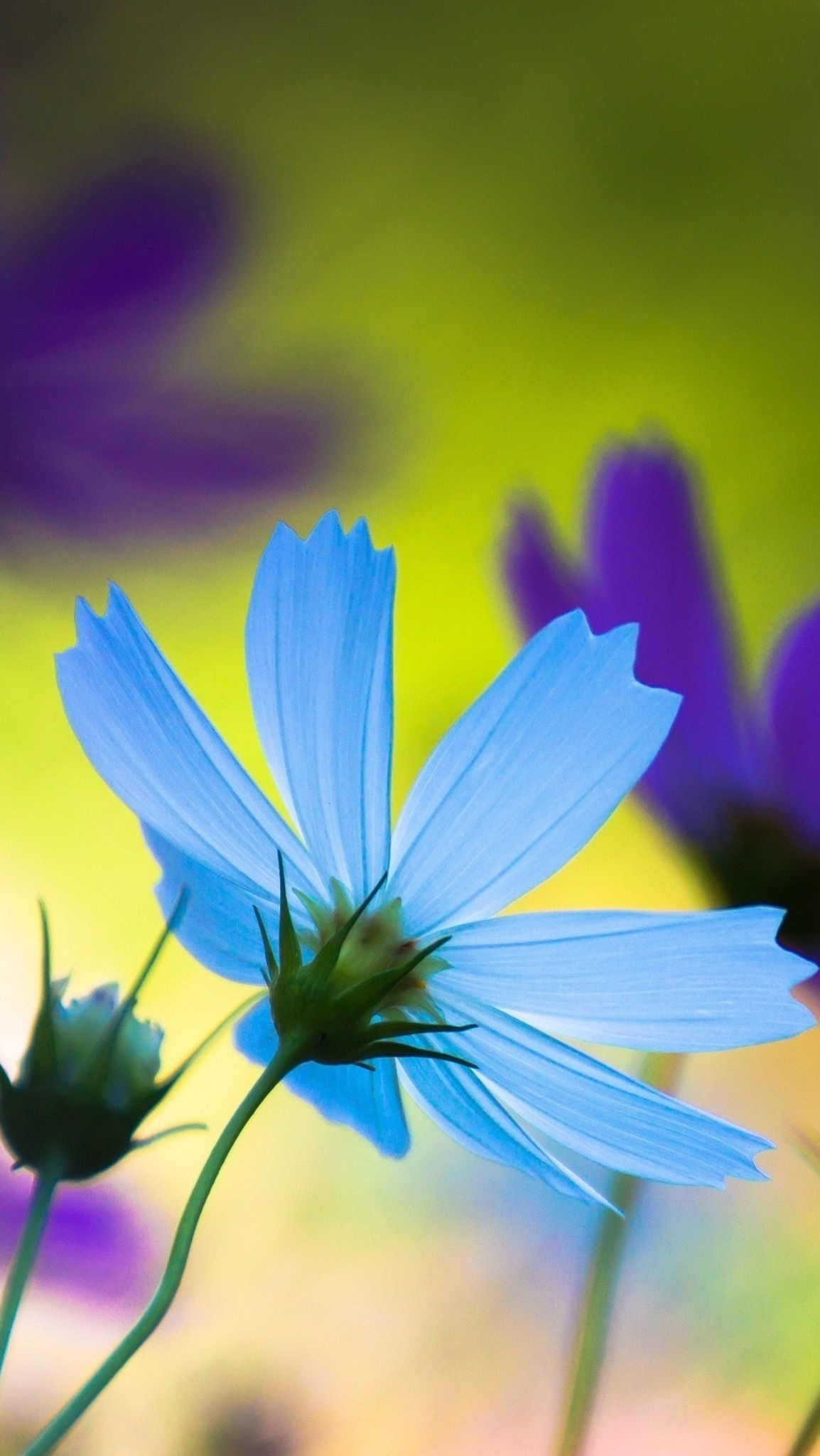 Pin by Angelica Arroyo on Wallpapers | Blue flower ...