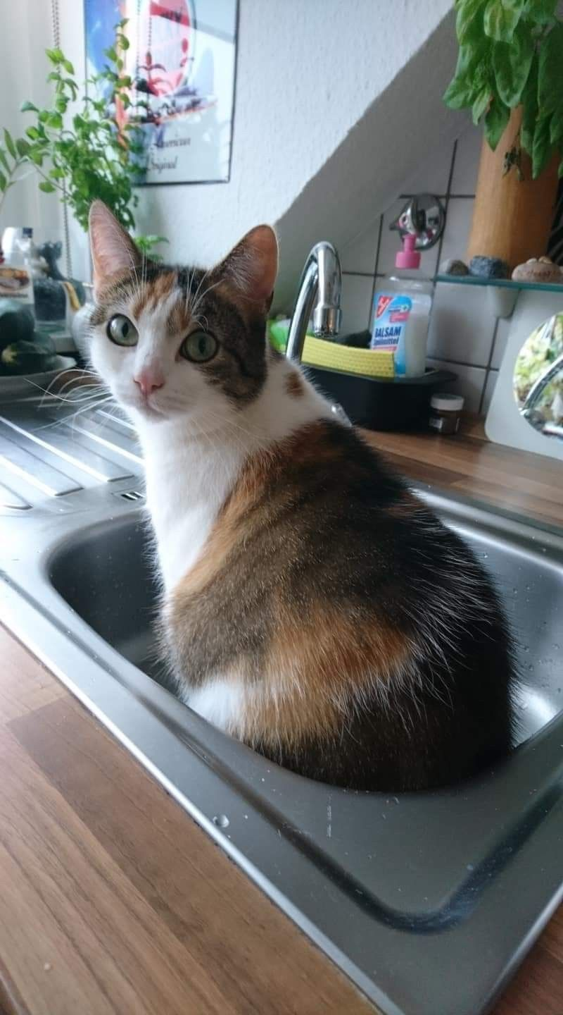 Beautiful Kitty In The Sink Pretty Cats Cute Cats Cute Cats And Kittens
