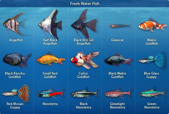 Types Of Freshwater Aquarium Fish Tropical Freshwater Fish Freshwater Aquarium Fish Aquarium Fish