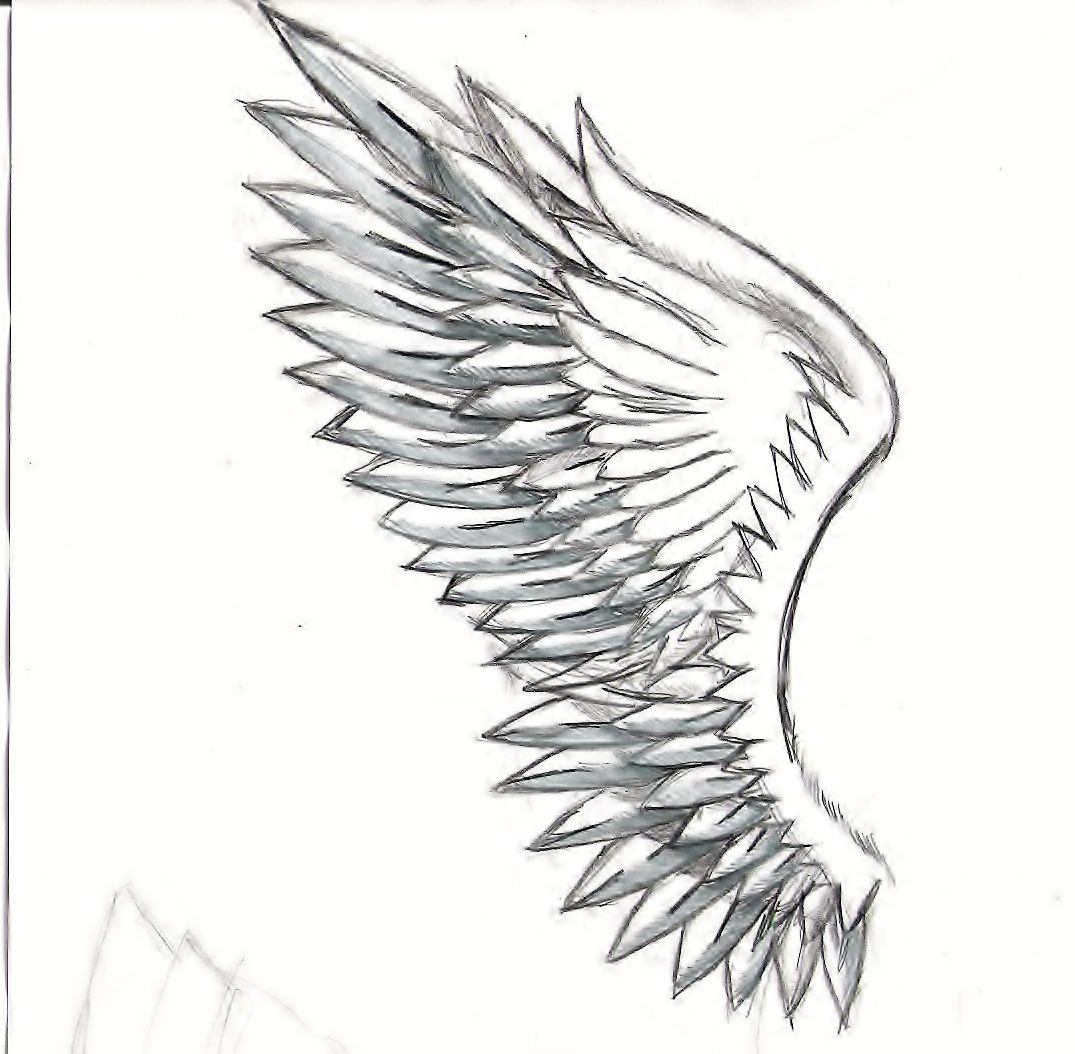 Line Drawing Wings : Sketches of angel wings related keywords suggestions