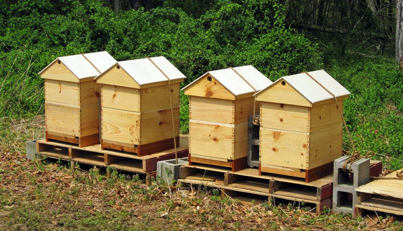 The best ventilated gabled roof Bee keeping, Bee hive