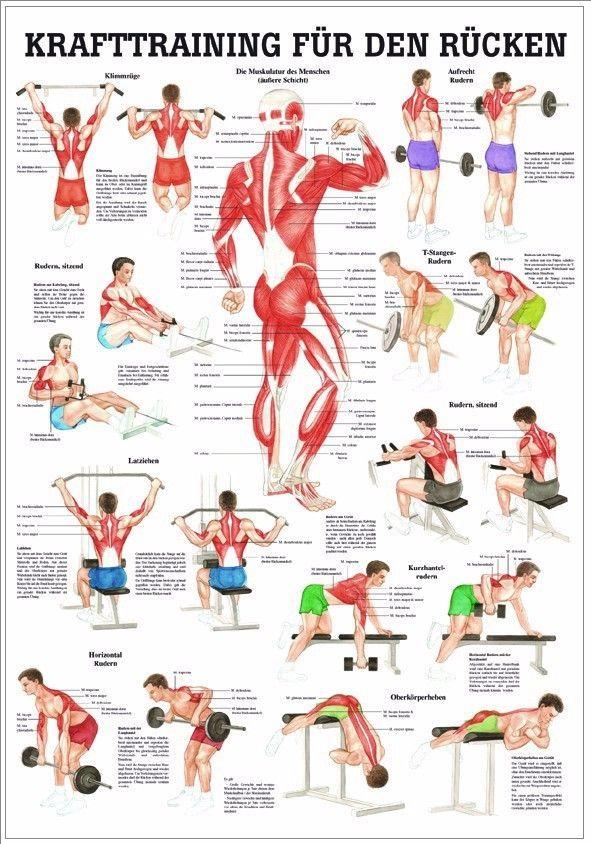 NEU Lehrtafel, Lehrposter, Poster: Krafttraining für den Rücken ...