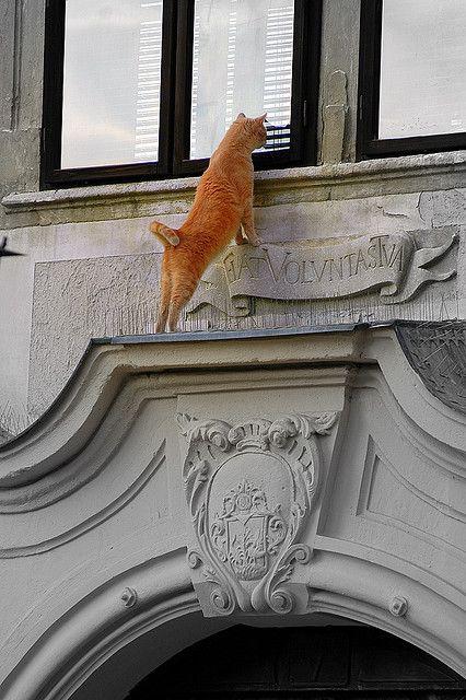 Window in Sopron's (Hungary) main square.  Peeping Tom.