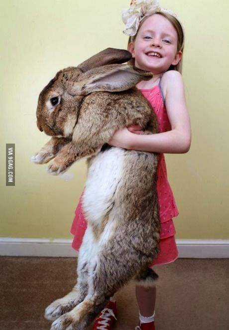 15 Pictures of Giant Rabbits You Didn't Know Even Existed ...