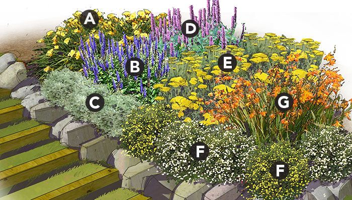 Marathon bloomers perennial garden plan plant list a 3 for Perennial garden design zone 9