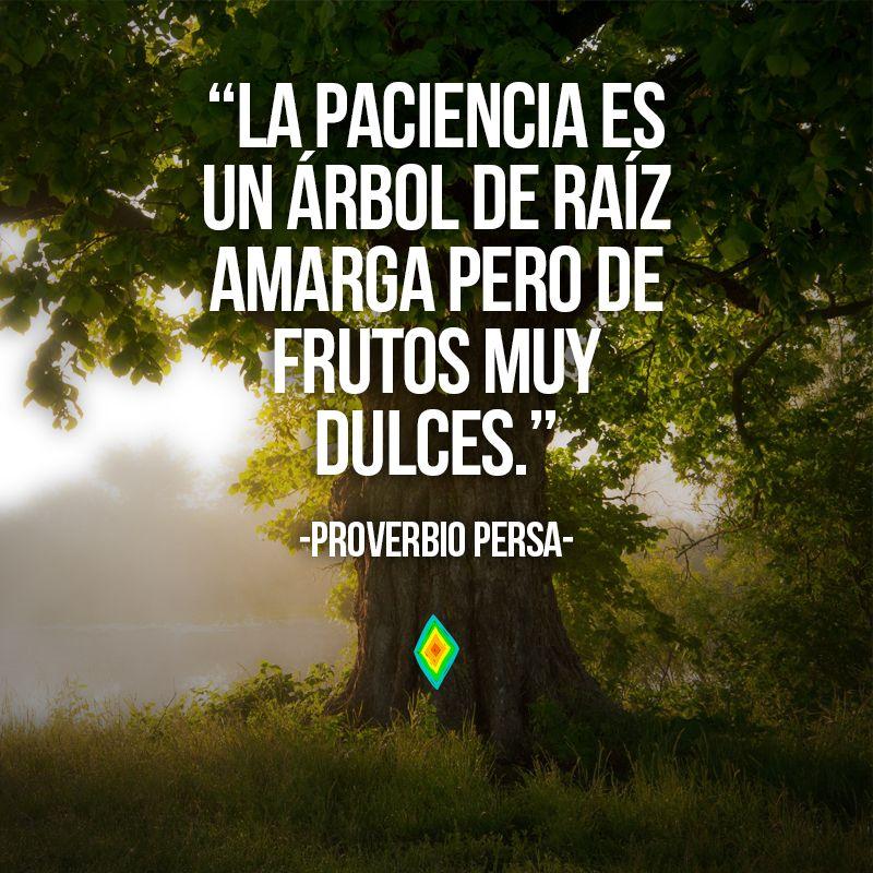 La Paciencia Es Un árbol De Raíz Amarga Pero De Frutos Muy