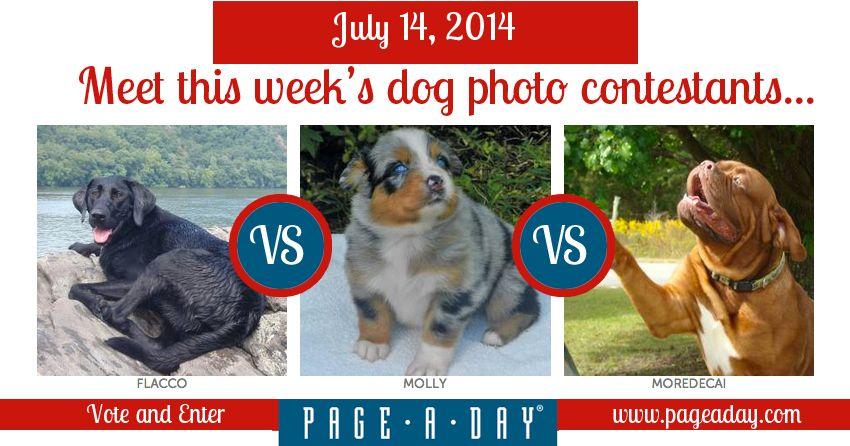 Vote On This Week S Cutest Pup Dogs Doggystyyle Pups