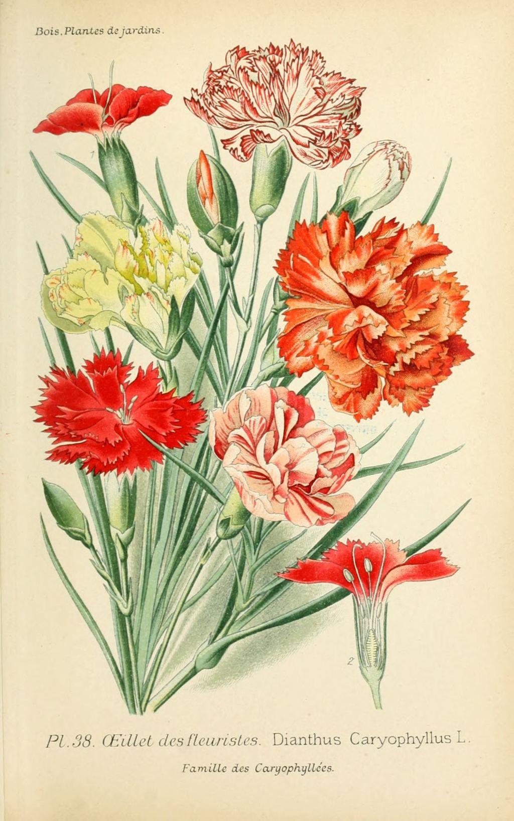Unique coloriage fleur de la reunion - Fleuriste dessin ...