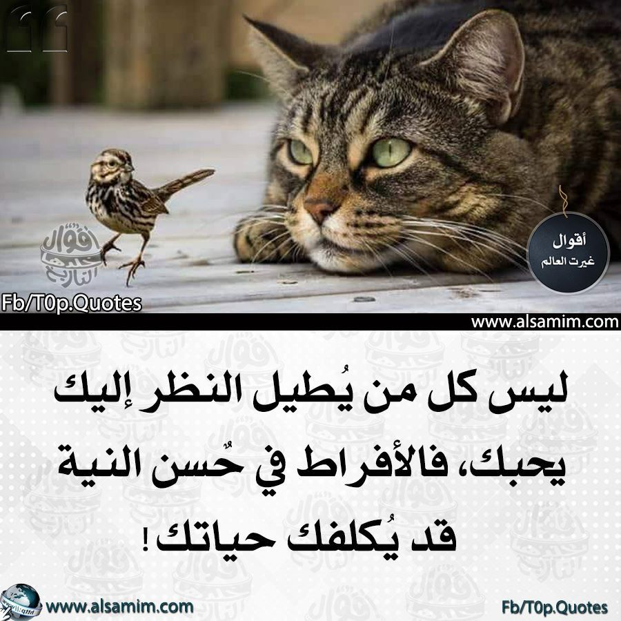 Pin By Azhar Alkenany On كلمات ساحرة Proverbs Quotes Arabic Quotes Quites