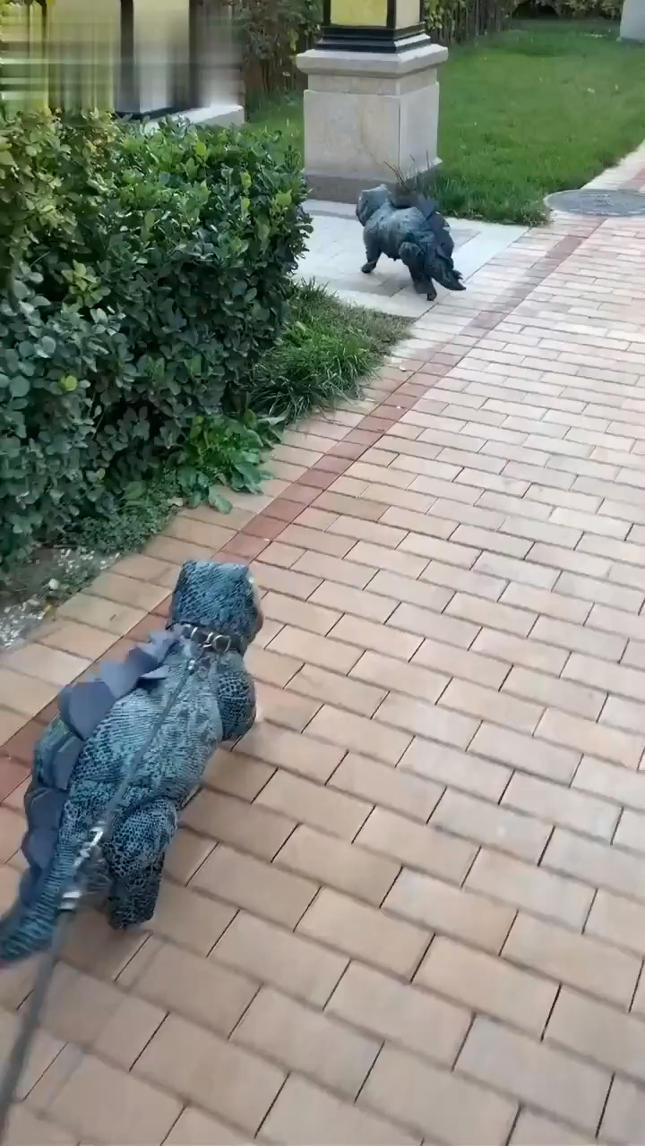 Dinosaur Pet Clothes