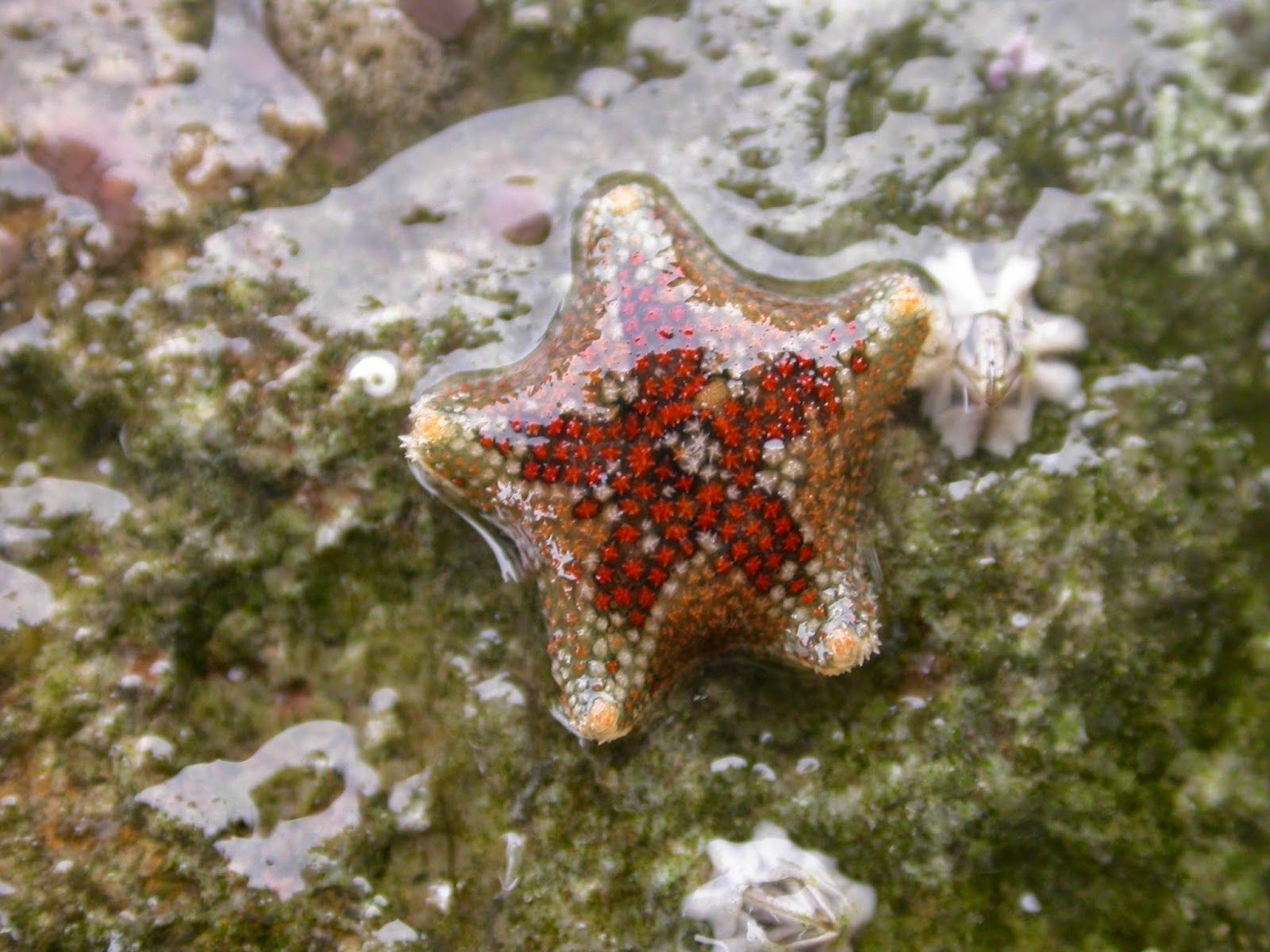 Starfish Anatomy Worksheet