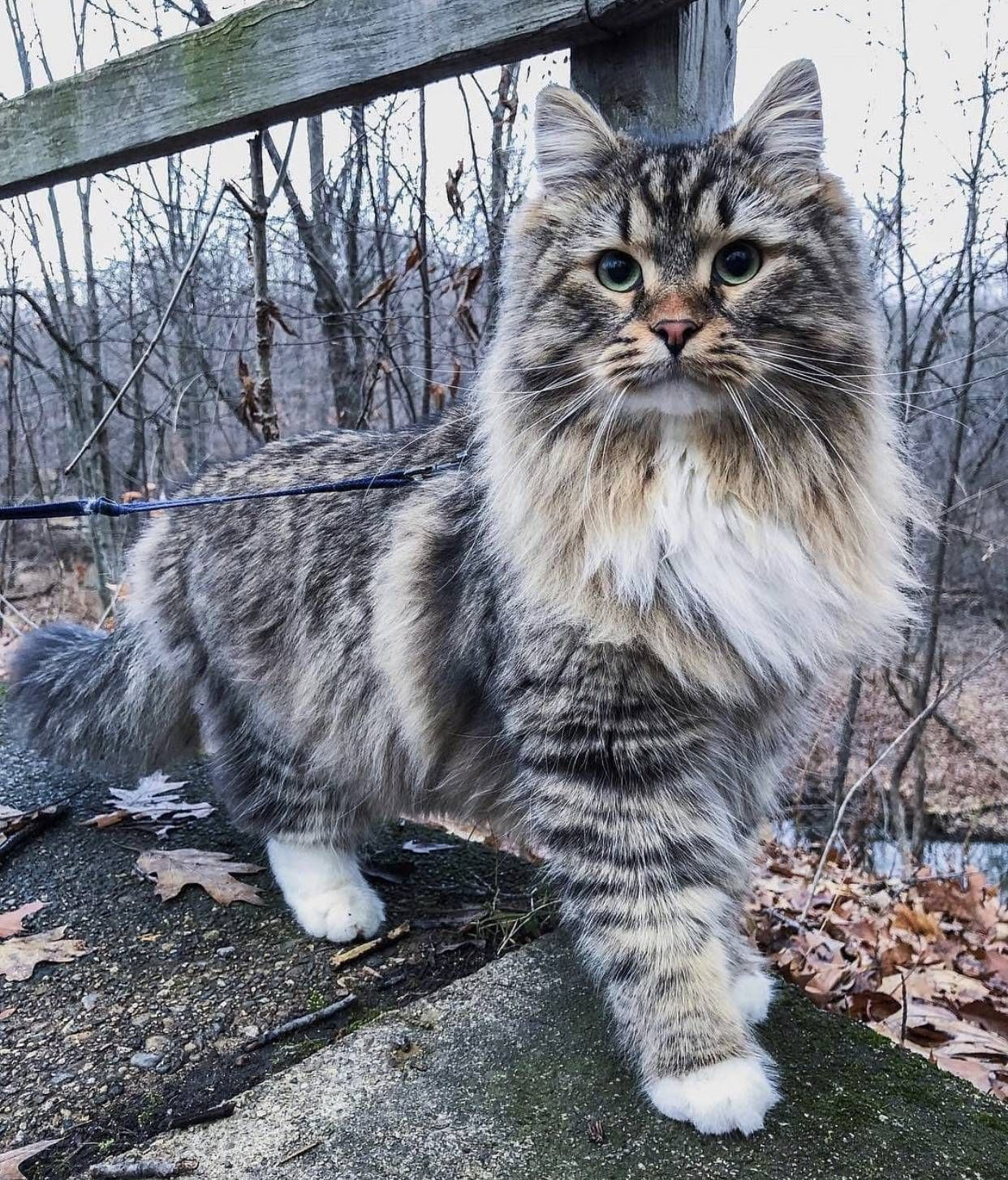 Such A Beautiful Cat Via Aww On January 23 2019 At 12 33am