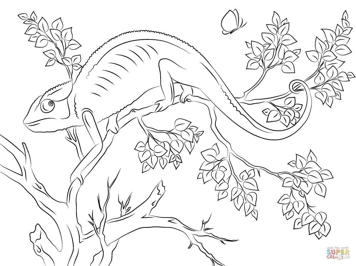 Chameleon Line Art Google Haku Coloring Pages Animal Coloring Pages Coloring Pictures