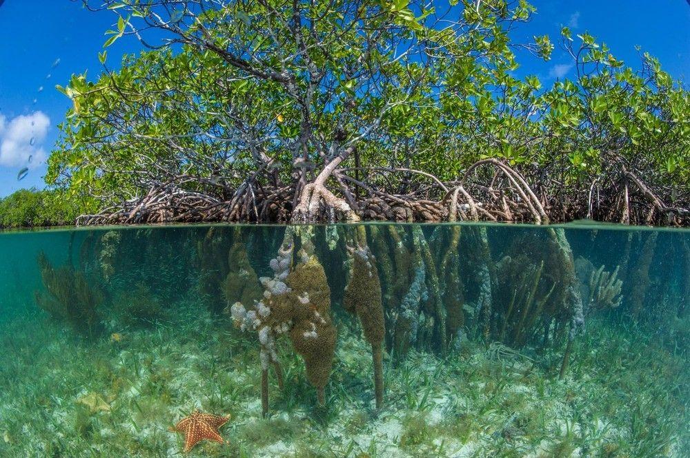 Pelican Beach South Water Caye Belize Dit Is De Enige Plek In Waar Je Veilig En Binnen Een Paar Minuten Naar Het Rif Kan Zwemmen