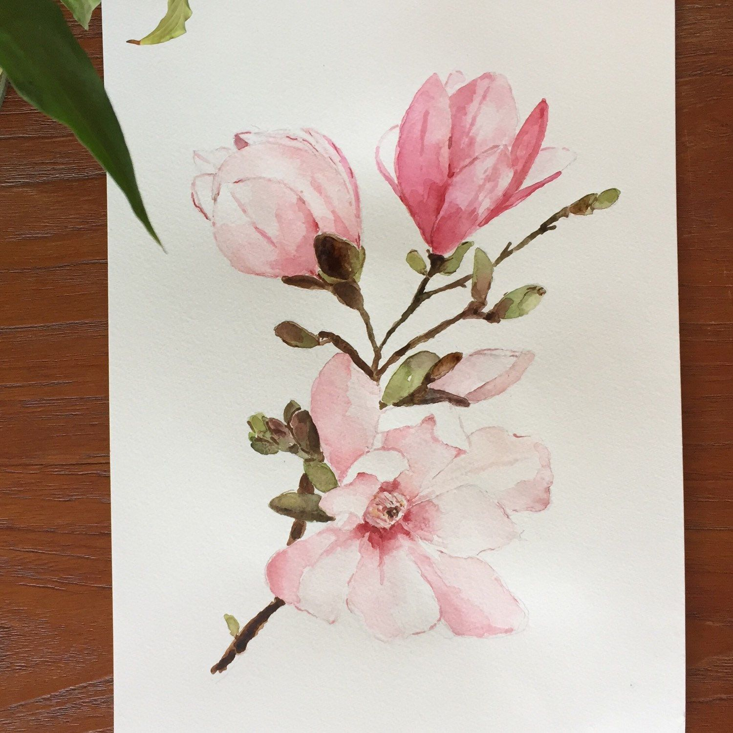 Just Added A New Watercolor Painting Of Beautiful Magnolia Flowers Watercolor Flowers Paintings Floral Watercolor Flower Drawing