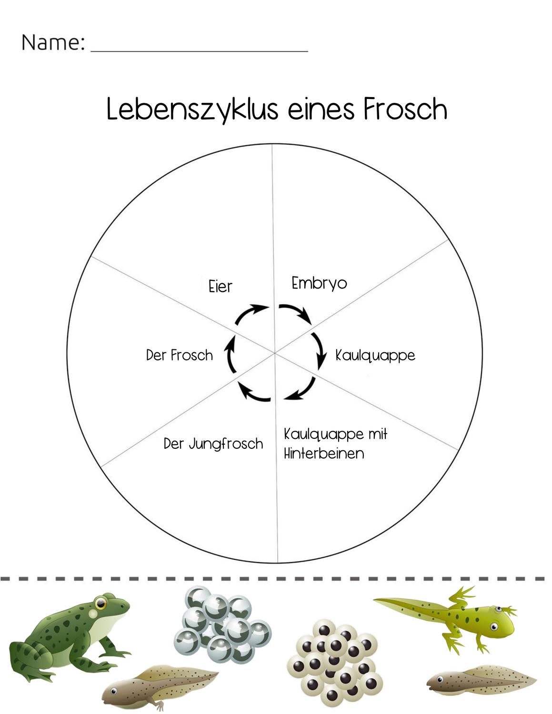 Lebenszyklus Frosch – Unterrichtsmaterial in den Fächern Biologie ...