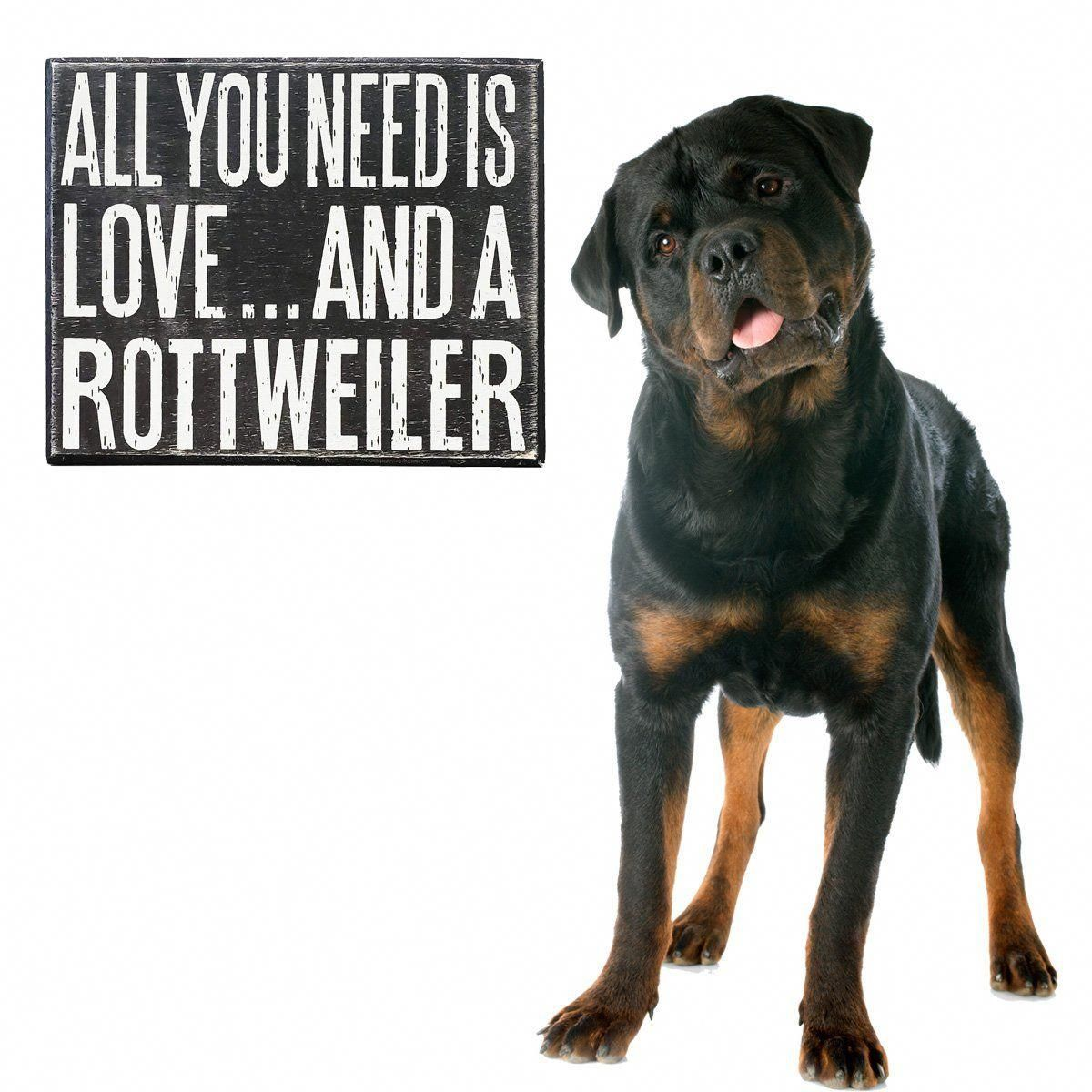 The Many Things We Love About The Rottweiler Puppies