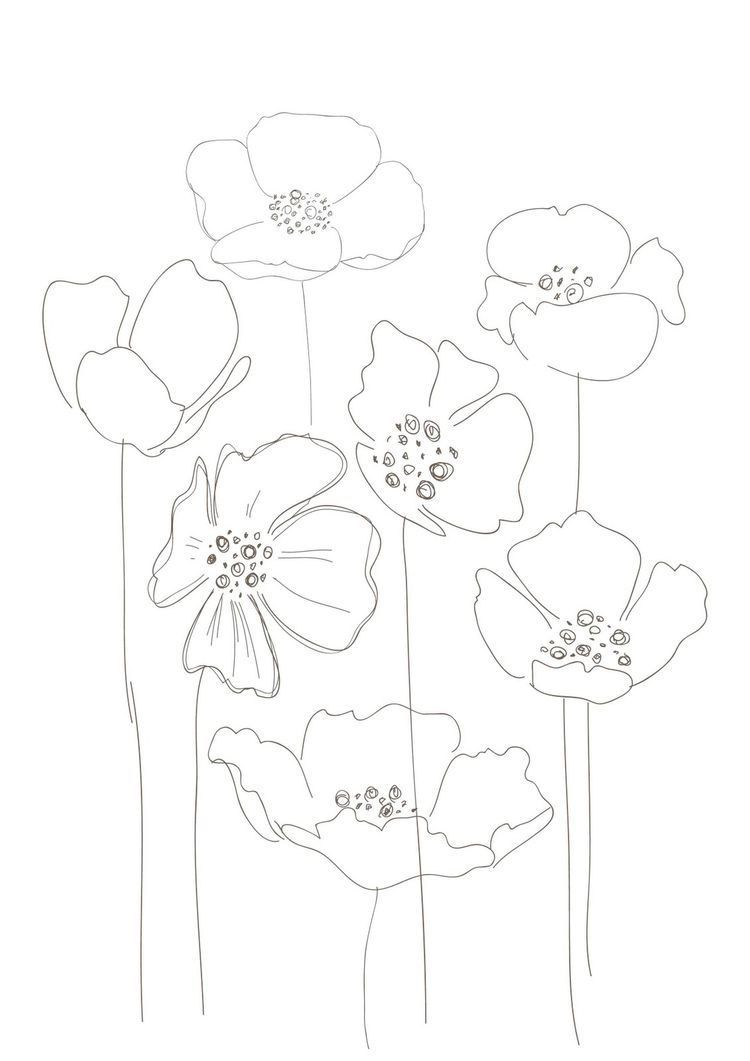 drawing simple Poppies, would make a interesting s
