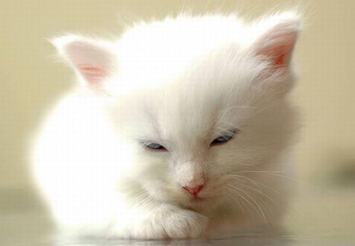 White Kitten Now Thats Cute With Images Cute Baby Animals