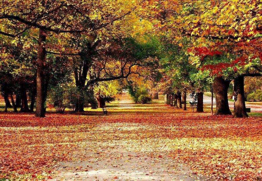 Naturaleza otoño, callejón, hojas, pintura wallpaper