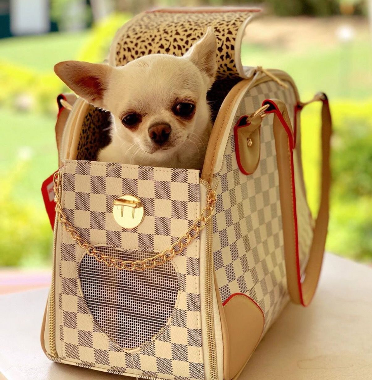 Cute Chihuahua Carry Bag Shop This Bag On Amazon Click Our