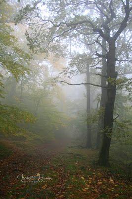 Kinder Gedichte Welt Nebelweben Kinder Gedichte Kindergedichte Schlaflieder