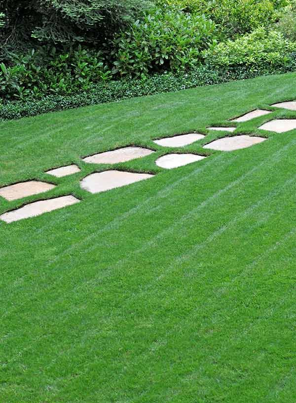 How to Green Up Your Lawn Lush lawn, Lawn, landscape