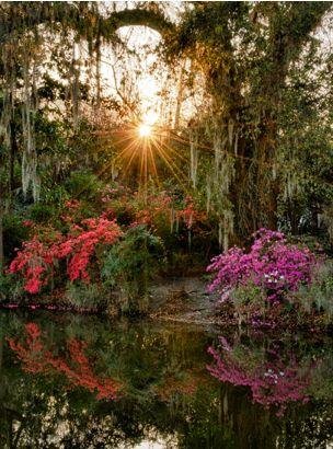 Magnolia Plantation Sunrise SC