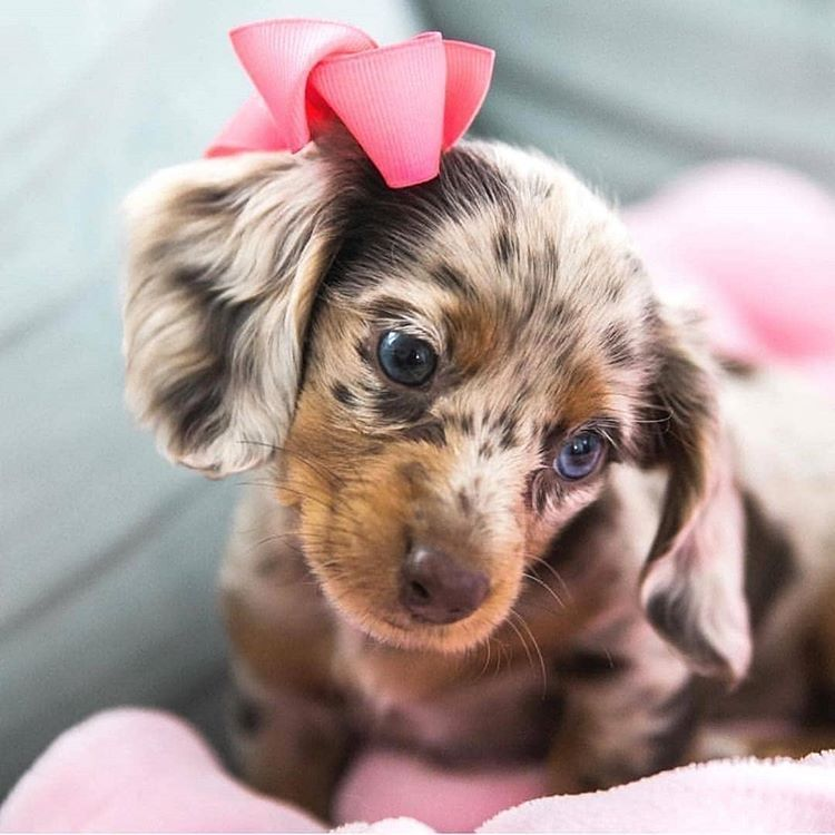 Look How Beautiful Rosie Is Especially Her Eyes