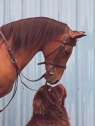 Red Horse bowing his head over great big red Newfoundland dog. Such a cute picture. They look so sweet, There will soon be a lick coming from that dog!
