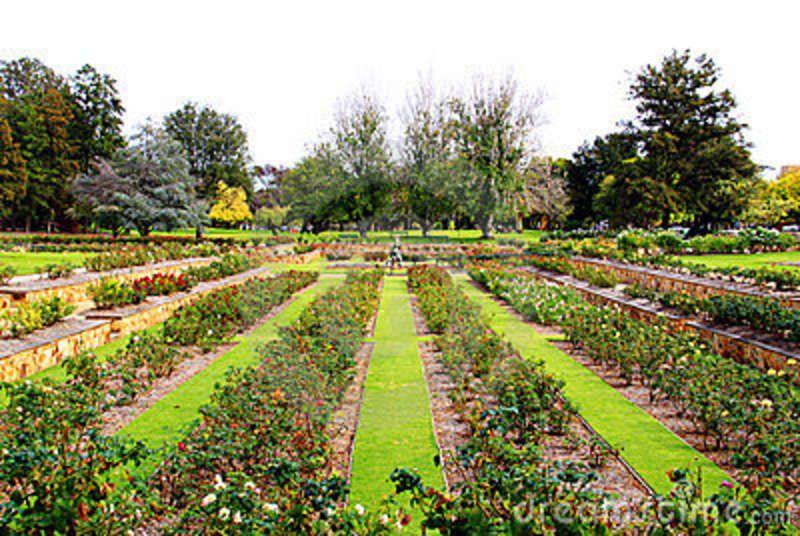 Formal rose garden - Adelaide, Australia