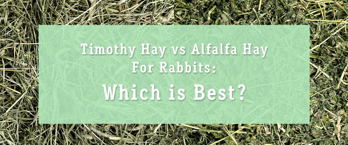 Timothy Hay vs. Alfalfa Hay for Rabbits Which is Best