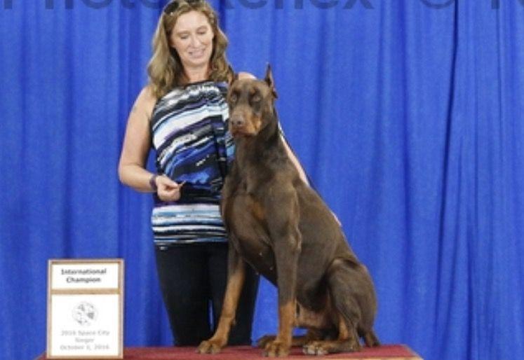 Litter of 9 Doberman Pinscher puppies for sale in CALDWELL