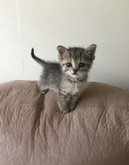 It Iz Monday So Here Iz Some Kittens Gallery Cute Cats And