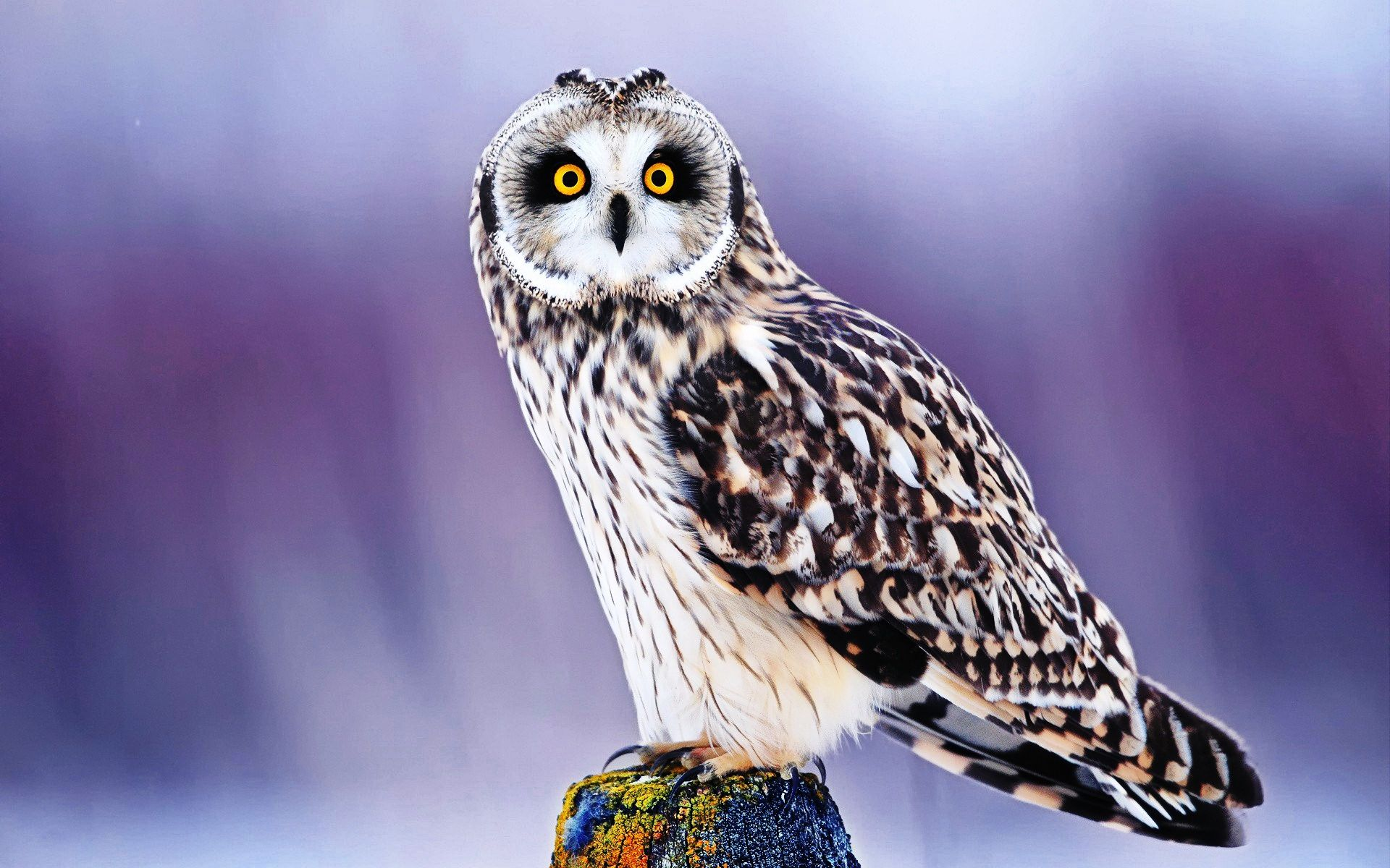 Best ideas about owl wallpaper iphone on pinterest owl hd best ideas about owl wallpaper iphone on pinterest owl voltagebd Choice Image